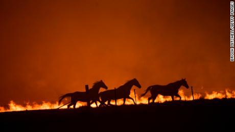Lo studio rileva che la crisi climatica ha reso gli incendi boschivi in Australia almeno il 30% più probabili