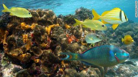 La barriera corallina giamaicana è stata spazzata via in soli 15 anni.