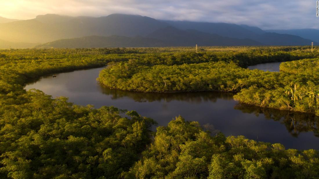 La foresta amazzonica potrebbe scomparire in meno di 50 anni una volta raggiunto il punto critico, avvertono gli scienziati