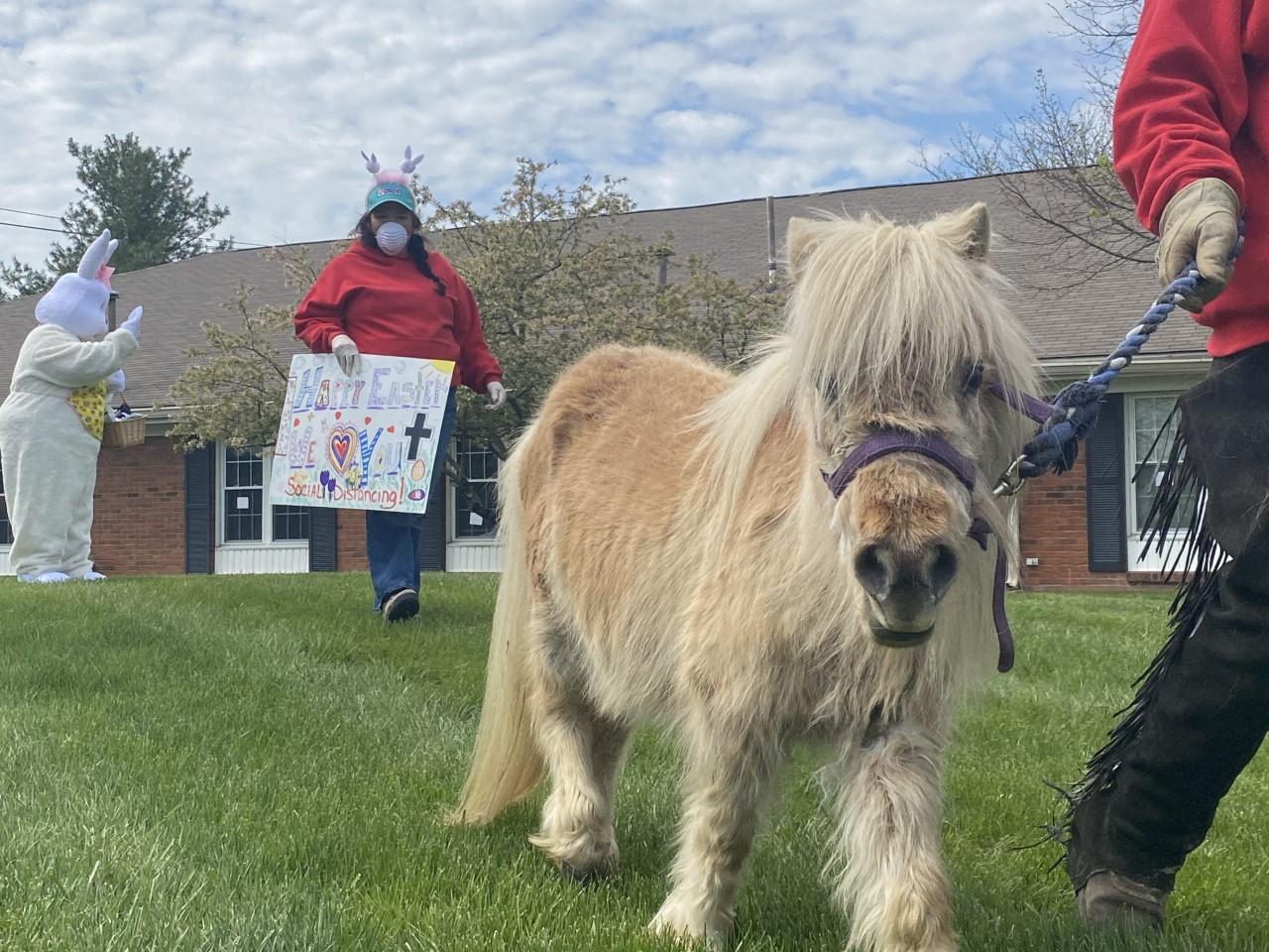 Cavalli in miniatura salutano i residenti della casa di cura Lexington attraverso le finestre