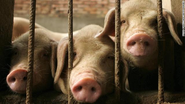 Il governo cinese rivela un elenco di bozze di animali che possono essere allevati per la carne