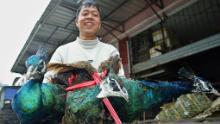 La Cina ha reso illegale il consumo di animali selvatici dopo l'epidemia di coronavirus. Ma terminare il commercio non sarà facile
