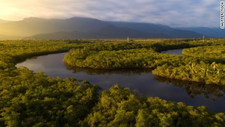 Alcuni scienziati sostengono che la foresta pluviale amazzonica sta già affrontando il suo punto di non ritorno.
