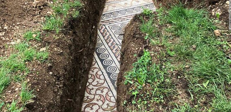 Pavimento a mosaico romano trovato sotto le viti nel nord Italia