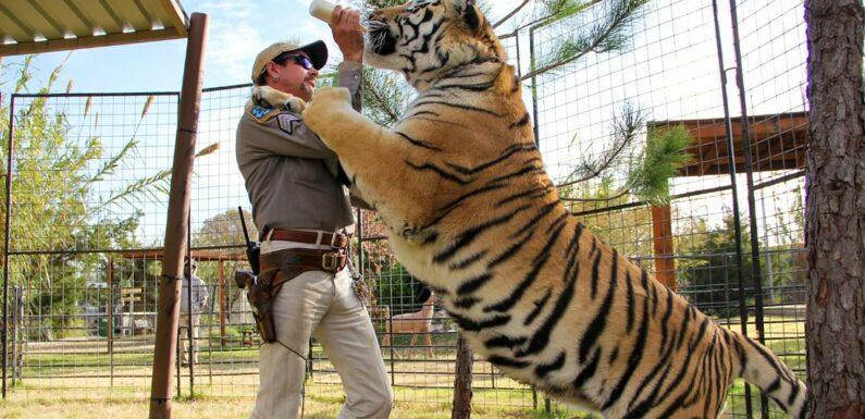 Il team di Tiger King Joe Exotic si rivolge a Carole Baskin per ottenere il suo zoo