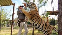 Si dice che Tiger King Joe Exotic abbia oltre 200 grandi gatti nel suo zoo dell'Oklahoma.