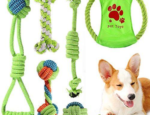 30 Migliori Giochi Per Cani Testato e Qualificato