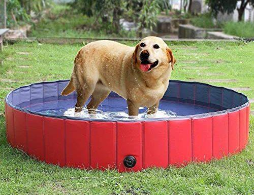 30 Migliori Piscina Per Cani Grandi Testato e Qualificato